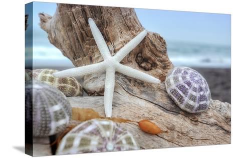 Crescent Beach Shells 7-Alan Blaustein-Stretched Canvas Print