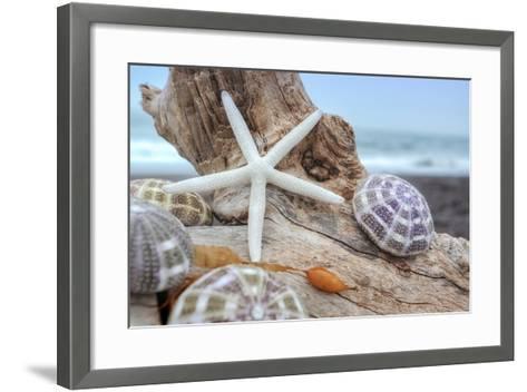 Crescent Beach Shells 7-Alan Blaustein-Framed Art Print