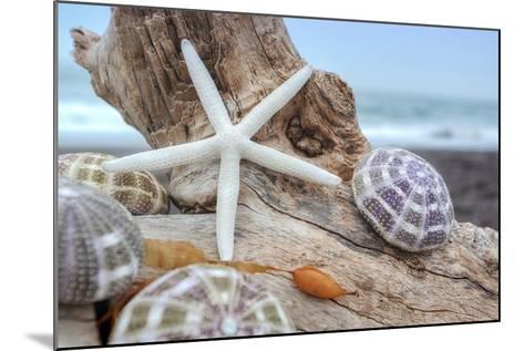 Crescent Beach Shells 7-Alan Blaustein-Mounted Photographic Print