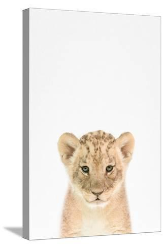 Baby Lion-Tai Prints-Stretched Canvas Print