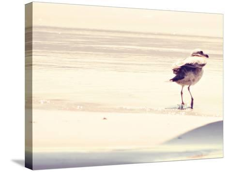 Bird at The Beach-Sylvia Coomes-Stretched Canvas Print