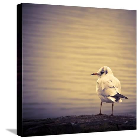 Are You Watching Me?-Joanna Pechmann-Stretched Canvas Print