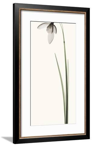 Snowdrop I-Robert Coop-Framed Art Print