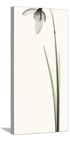Snowdrop I-Robert Coop-Stretched Canvas Print