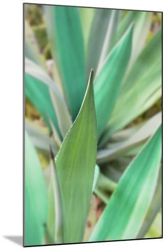 Agave Succulent #3-Alan Blaustein-Mounted Photographic Print