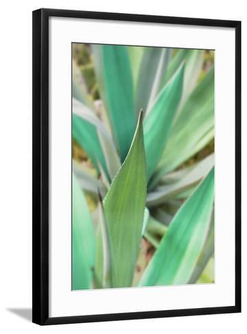 Agave Succulent #3-Alan Blaustein-Framed Art Print