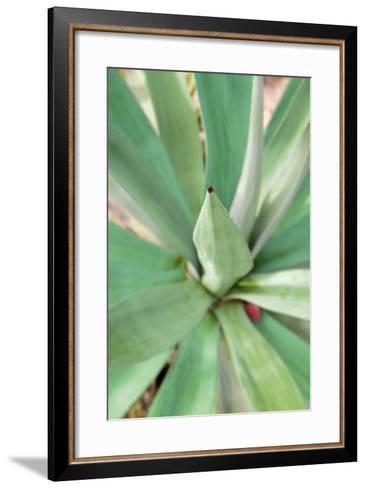 Agave Succulent #2-Alan Blaustein-Framed Art Print
