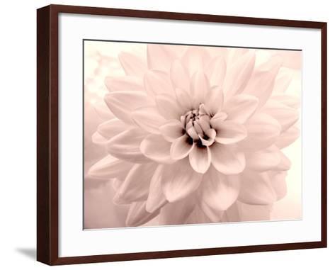 Pink Dahlia 2-Judy Stalus-Framed Art Print