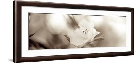 Florison #104-Alan Blaustein-Framed Art Print