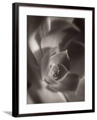 Florison #11-Alan Blaustein-Framed Art Print