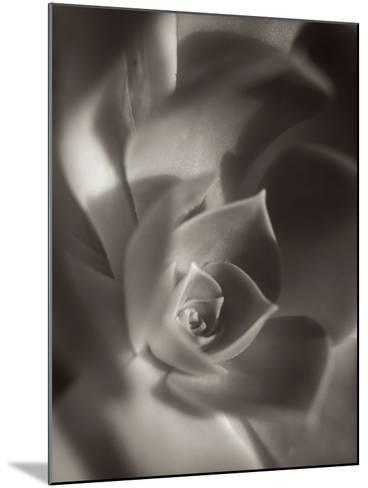 Florison #11-Alan Blaustein-Mounted Photographic Print