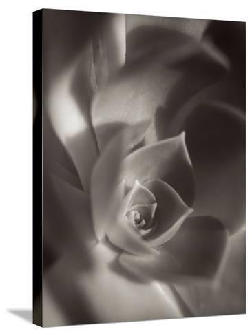 Florison #11-Alan Blaustein-Stretched Canvas Print