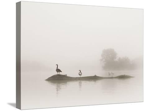 Melton Lake-Nicholas Bell-Stretched Canvas Print