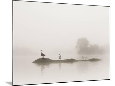 Melton Lake-Nicholas Bell-Mounted Photographic Print