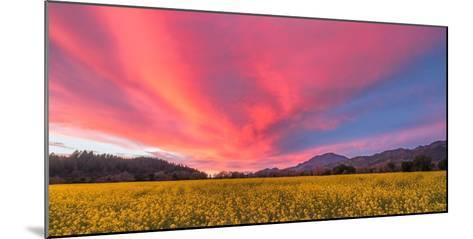 Spring Sunset Napa Valley-Elizabeth Carmel-Mounted Photographic Print