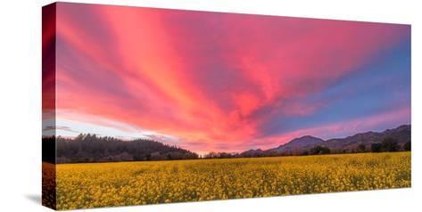 Spring Sunset Napa Valley-Elizabeth Carmel-Stretched Canvas Print