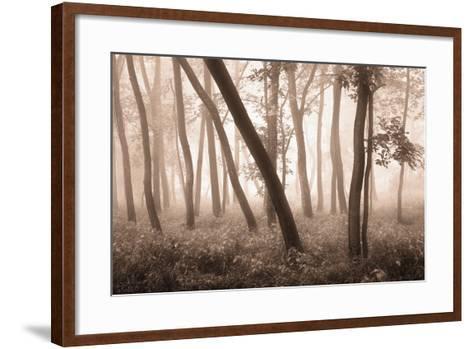Reticent Woods-Igor Svibilsky-Framed Art Print