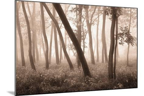 Reticent Woods-Igor Svibilsky-Mounted Photographic Print