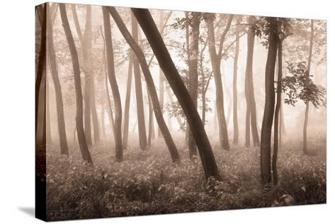 Reticent Woods-Igor Svibilsky-Stretched Canvas Print
