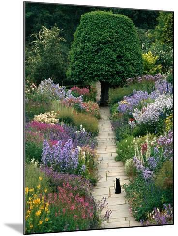 The Garden Cat-Greg Gawlowski-Mounted Photographic Print
