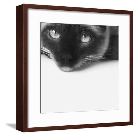 No Stress-Jon Bertelli-Framed Art Print