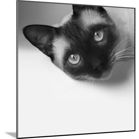 Hey!-Jon Bertelli-Mounted Photographic Print
