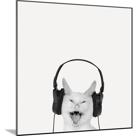 Rockin' Kitten-Jon Bertelli-Mounted Photographic Print