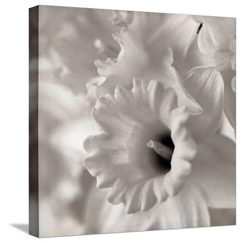 Florison #45-Alan Blaustein-Stretched Canvas Print