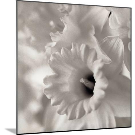 Florison #45-Alan Blaustein-Mounted Photographic Print