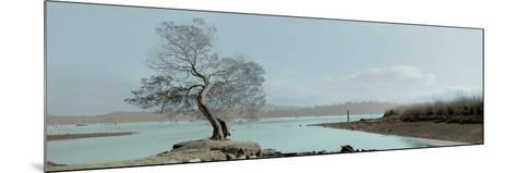 Lagoon Oak Tree-Alan Blaustein-Mounted Photographic Print