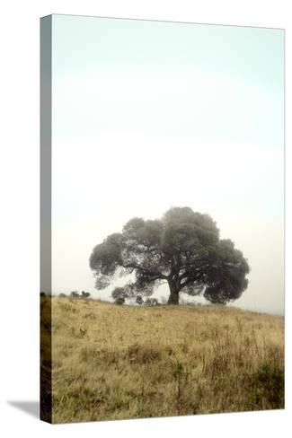 Oak Tree #52-Alan Blaustein-Stretched Canvas Print