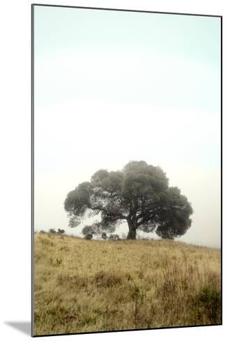 Oak Tree #52-Alan Blaustein-Mounted Photographic Print
