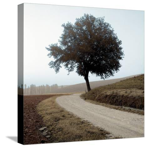 Tuscany #12-Alan Blaustein-Stretched Canvas Print