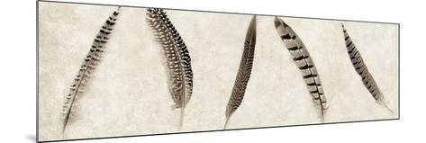 Feathers Panel #1-Alan Blaustein-Mounted Photographic Print