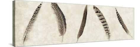 Feathers Panel #1-Alan Blaustein-Stretched Canvas Print