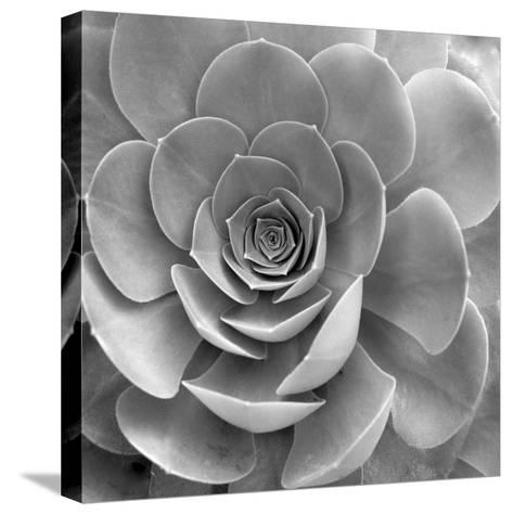 Floral #22-Alan Blaustein-Stretched Canvas Print