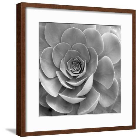 Floral #22-Alan Blaustein-Framed Art Print