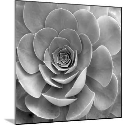 Floral #22-Alan Blaustein-Mounted Photographic Print