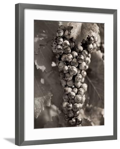 Grapes #23-Alan Blaustein-Framed Art Print