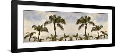 Palm Banner #2 - Color-Alan Blaustein-Framed Art Print