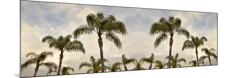 Palm Banner #2 - Color-Alan Blaustein-Mounted Photographic Print