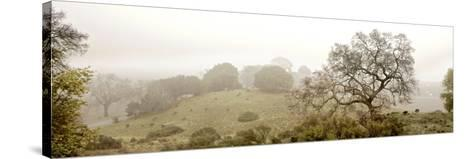 Pano Version 4-Alan Blaustein-Stretched Canvas Print