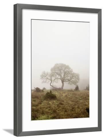 Oak Tree #26-Alan Blaustein-Framed Art Print