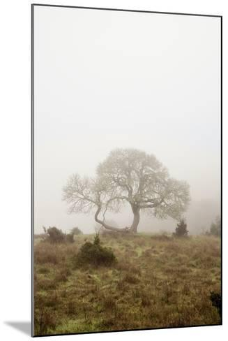 Oak Tree #26-Alan Blaustein-Mounted Photographic Print
