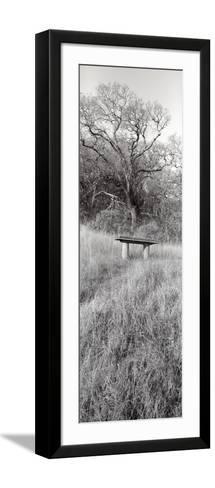 Novato Oak-Alan Blaustein-Framed Art Print