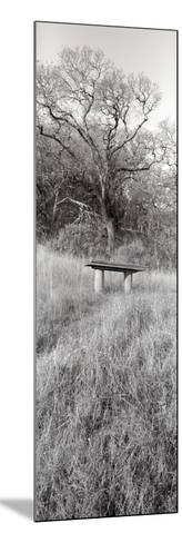 Novato Oak-Alan Blaustein-Mounted Photographic Print