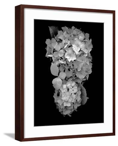 Floral B-W #29-Alan Blaustein-Framed Art Print