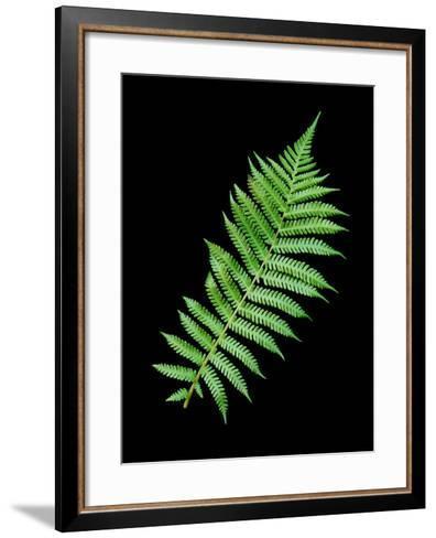 Floral Color #18-Alan Blaustein-Framed Art Print