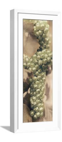 Chardonnay-Alan Blaustein-Framed Art Print