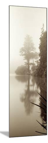 Lakeside Tree #2-Alan Blaustein-Mounted Photographic Print